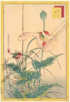 Nakayama Sugakudo: Sparrows and Poppies - Austrian Museum of Applied Arts