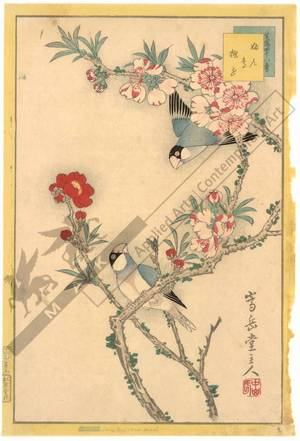 Nakayama Sugakudo: Java sparrow and Cherry blossoms - Austrian Museum of Applied Arts