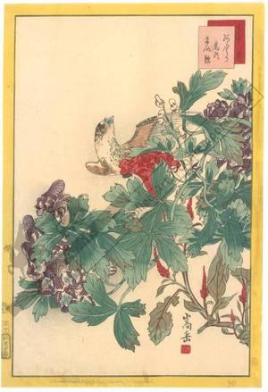 Nakayama Sugakudo: Finch and cockscomb - Austrian Museum of Applied Arts