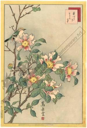Nakayama Sugakudo: Sazanka camellia - Austrian Museum of Applied Arts