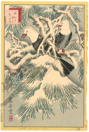 Nakayama Sugakudo: Striped Bulbul and Pine tree with snow - Austrian Museum of Applied Arts