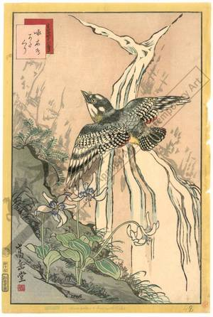 Nakayama Sugakudo: Woodpecker and Dog violet - Austrian Museum of Applied Arts