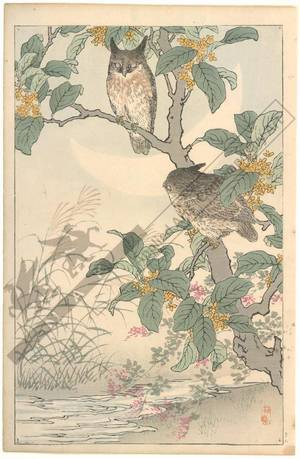 幸野楳嶺: Owls (title not original) - Austrian Museum of Applied Arts