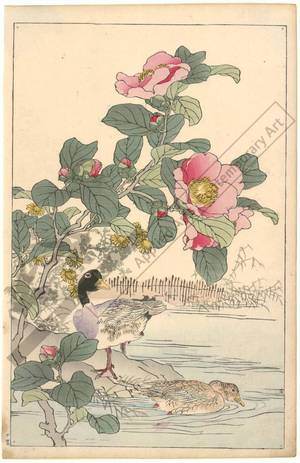 Kono Bairei: Ducks and camellias (title not original) - Austrian Museum of Applied Arts