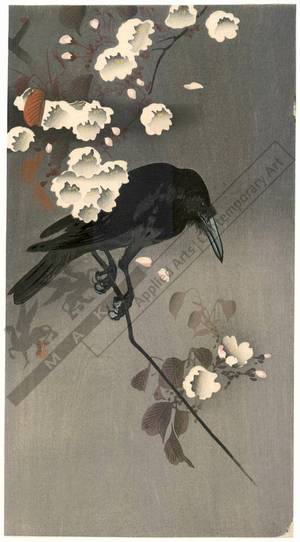 Shoson Ohara: Crow on a flowering cherry branch (title not original) - Austrian Museum of Applied Arts