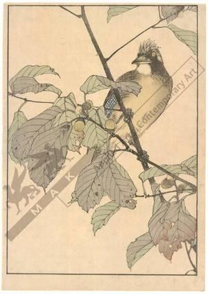Kono Bairei: Bird sitting on an oak (title not original) - Austrian Museum of Applied Arts