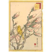 Nakayama Sugakudo: Canary-bird and magnolia - Austrian Museum of Applied Arts