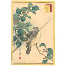 Nakayama Sugakudo: Pigeon and Mulberry - Austrian Museum of Applied Arts