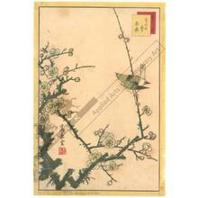 Nakayama Sugakudo: Warbler and White Plum - Austrian Museum of Applied Arts