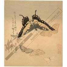 Kubo: Five butterflies (title not original) - Austrian Museum of Applied Arts