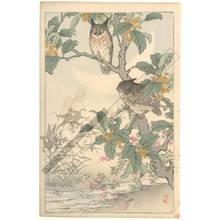 Kono Bairei: Owls (title not original) - Austrian Museum of Applied Arts