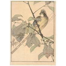 幸野楳嶺: Bird sitting on an oak (title not original) - Austrian Museum of Applied Arts