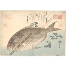 Utagawa Hiroshige: Sea bream (title not original) - Austrian Museum of Applied Arts