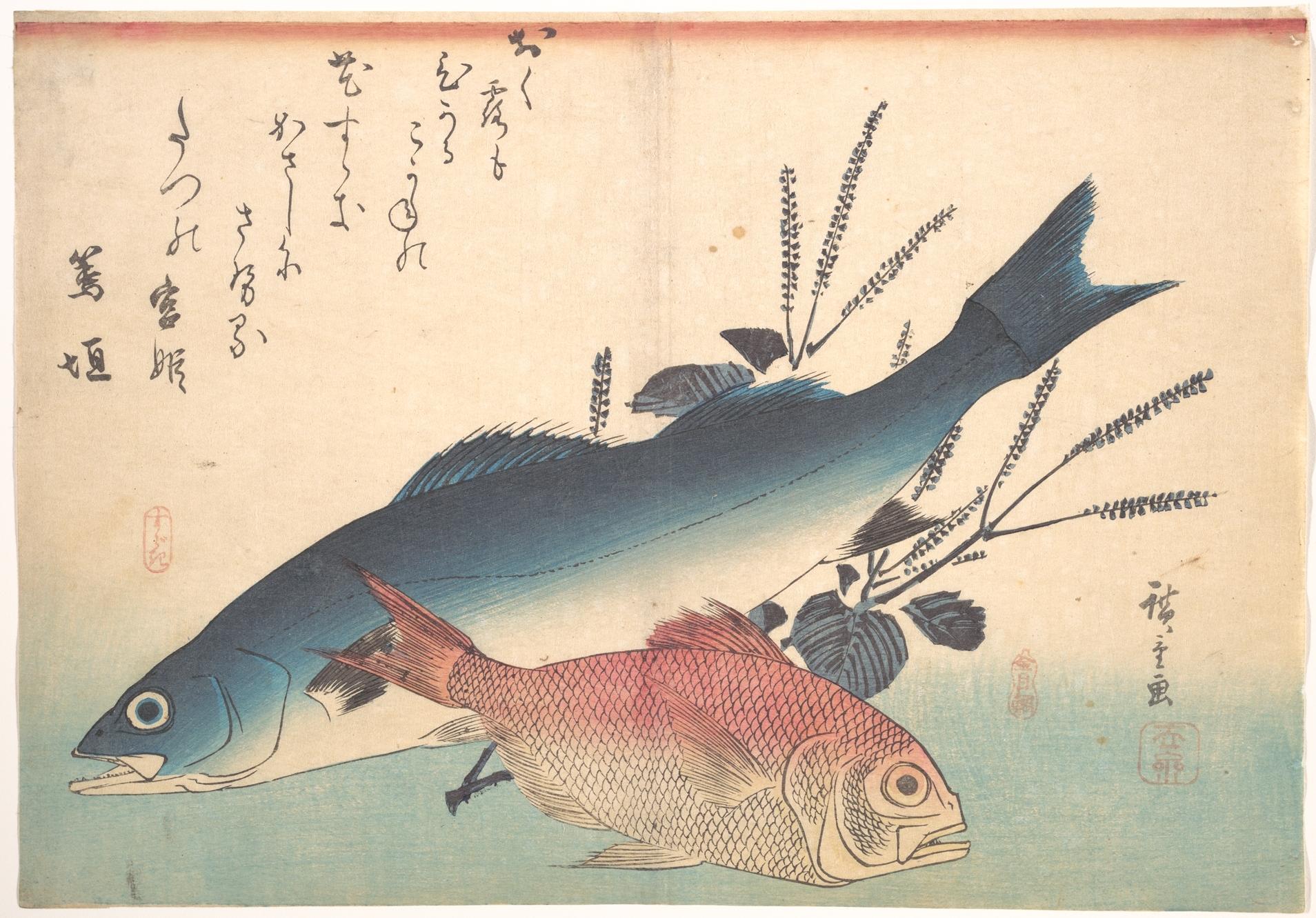Suzuki Fish In English
