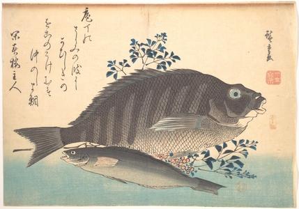 歌川広重: Shimadai and Ainame Fish, from the series Uozukushi (Every Variety of Fish) - メトロポリタン美術館