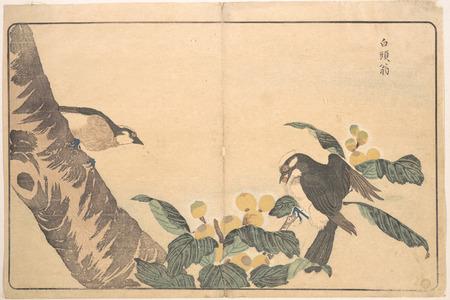 Keisai: Bai tou weng - メトロポリタン美術館