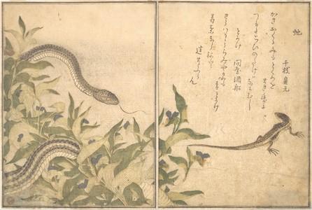 喜多川歌麿: Skink and Snake (Tokage and Hebi), from Picture Book of Selected Insects with Crazy Poems (Ehon Mushi Erabi) - メトロポリタン美術館