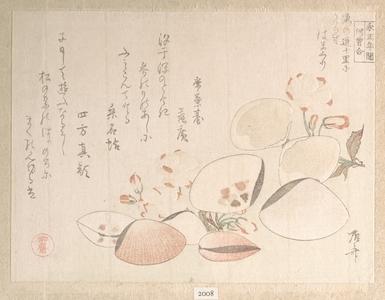 Ryuryukyo Shinsai: Cherry Blossoms and Shells - Metropolitan Museum of Art