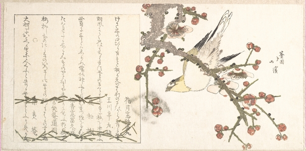 Totoya Hokkei: Bird Perching on a Palm Branch - Metropolitan Museum of Art