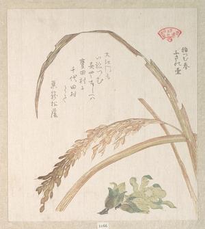 窪俊満: Rice Plant and Butter-Burs - メトロポリタン美術館