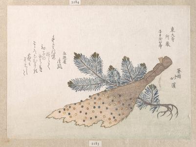 魚屋北渓: Young Pine Tree and Jeweled Broom - メトロポリタン美術館