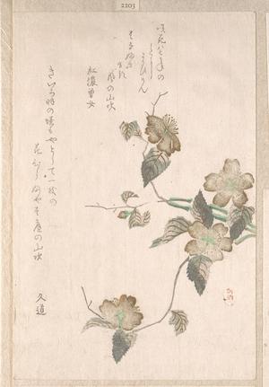 無款: Yamabuki Flowers (kerria japonica) - メトロポリタン美術館