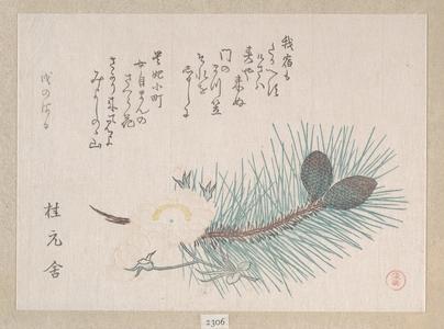窪俊満: Pines and Cherry Blossoms - メトロポリタン美術館