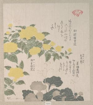 窪俊満: Corchorus (or Yellow Rose) and Creeping Saxifrage - メトロポリタン美術館