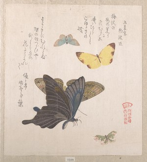 Kubo Shunman: Various Moths and Butterflies - Metropolitan Museum of Art