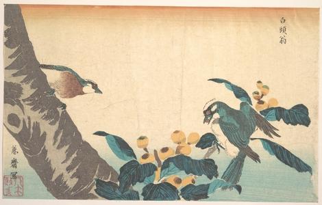 渓斉英泉: Birds and Flowers - メトロポリタン美術館