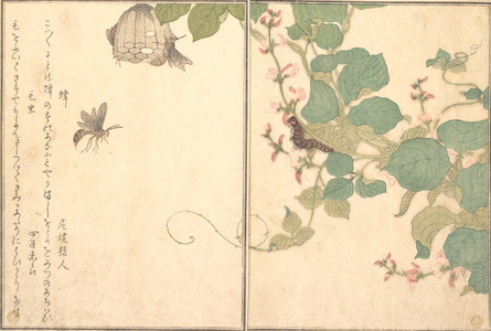 Kitagawa Utamaro: Bee and Caterpillar (Hachi and Kemushi), from Picture Book of Selected Insects with Crazy Poems (Ehon Mushi Erabi) - Metropolitan Museum of Art