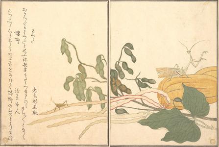喜多川歌麿: Praying Mantis and Cone-headed Grasshopper (Kamakiri and Batta), from Picture Book of Selected Insects with Crazy Poems (Ehon Mushi Erabi) - メトロポリタン美術館