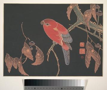 伊藤若冲: Red Parrot on the Branch of a Tree - メトロポリタン美術館