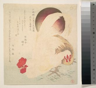 魚屋北渓: Rising Sun and a Cock and a Hen - メトロポリタン美術館