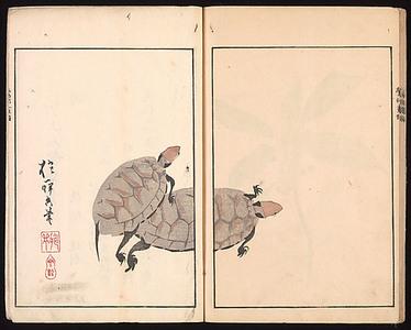 Sakai Hoitsu: The Ôson Picture Album (Ôson gafu) - Metropolitan Museum of Art