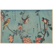歌川広重: Titmouse and Camellias (right), Sparrow and Wild Roses (center), and Black-naped Oriole and Cherry Blossoms (left) - メトロポリタン美術館