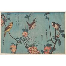 歌川広重: Titmouse and Camellias (right), Sparrow and Wild Roses (center), and Black-naped Oriole and Cherry Blossoms (left) - メトロポリタン美術館
