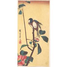 歌川広重: Camellia and Blue-Headed Bird - メトロポリタン美術館
