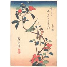 Utagawa Hiroshige: Japanese White Eye on a Camellia Branch - Metropolitan Museum of Art