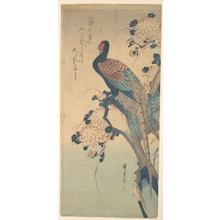 歌川広重: Pheasant with Chrysanthemums - メトロポリタン美術館