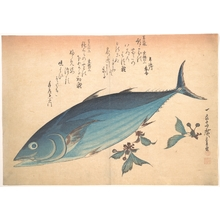 歌川広重: Katsuo Fish with Cherry Buds, from the series Uozukushi (Every Variety of Fish) - メトロポリタン美術館
