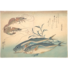 歌川広重: Aji Fish and Kuruma-ebi, from the series Uozukushi (Every Variety of Fish) - メトロポリタン美術館