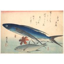 歌川広重: Tobiuo and Ishimochi Fish, from the series Uozukushi (Every Variety of Fish) - メトロポリタン美術館