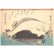歌川広重: Hirame and Mebaru Fish with Cherry Blossoms, from the series Uozukushi (Every Variety of Fish) - メトロポリタン美術館