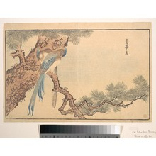 Keisai: Paradise Fly-catcher - Metropolitan Museum of Art