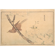 Keisai: The Gray Thrush - Metropolitan Museum of Art