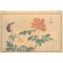 Keisai: Chinese Oriole and Peonies - Metropolitan Museum of Art