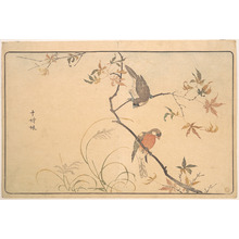 Keisai: Jûshimatsu (Begalee or a society finch) - Metropolitan Museum of Art