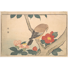 Keisai: Camellias with a Bird - Metropolitan Museum of Art