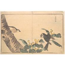 Keisai: Bai tou weng - Metropolitan Museum of Art